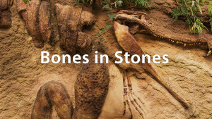 The Bible And Dinosaurs: How They Died