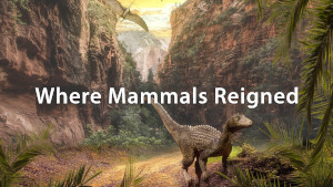 Human Evolution: How Did It Happen?