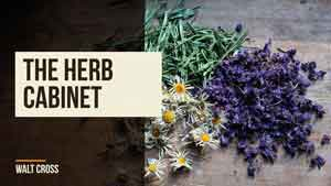 Natures Remedy: Plants as Medicine